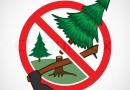 Можно ли рубить дрова в лесу